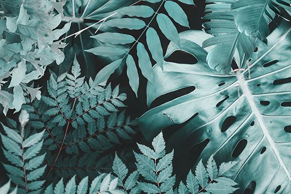 Dschungel 10